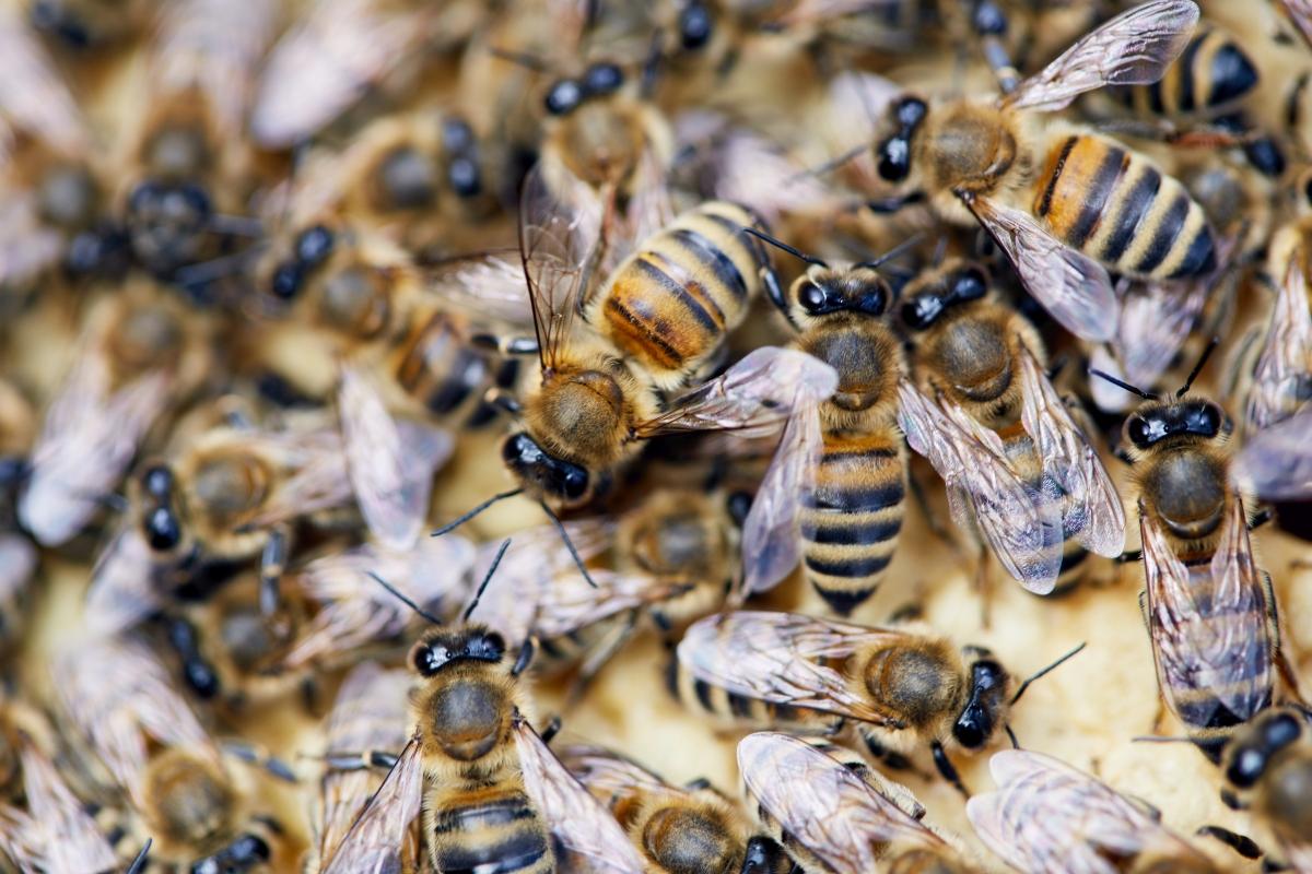 Czym jest mleczko pszczele?